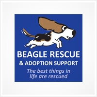 regal-rescue-beagle-rescue