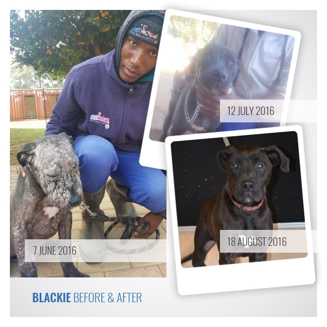 Blackie Success Story