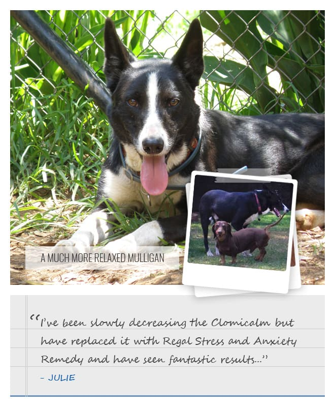 Regal Stress and Anxiety Remedy - Mulligan's Story