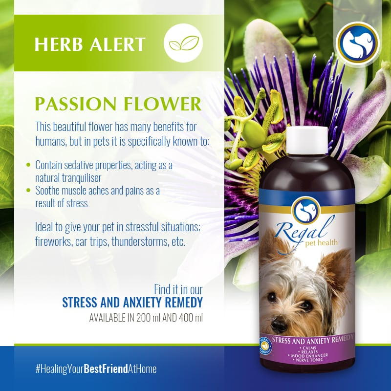 herb-alert-passion-flower