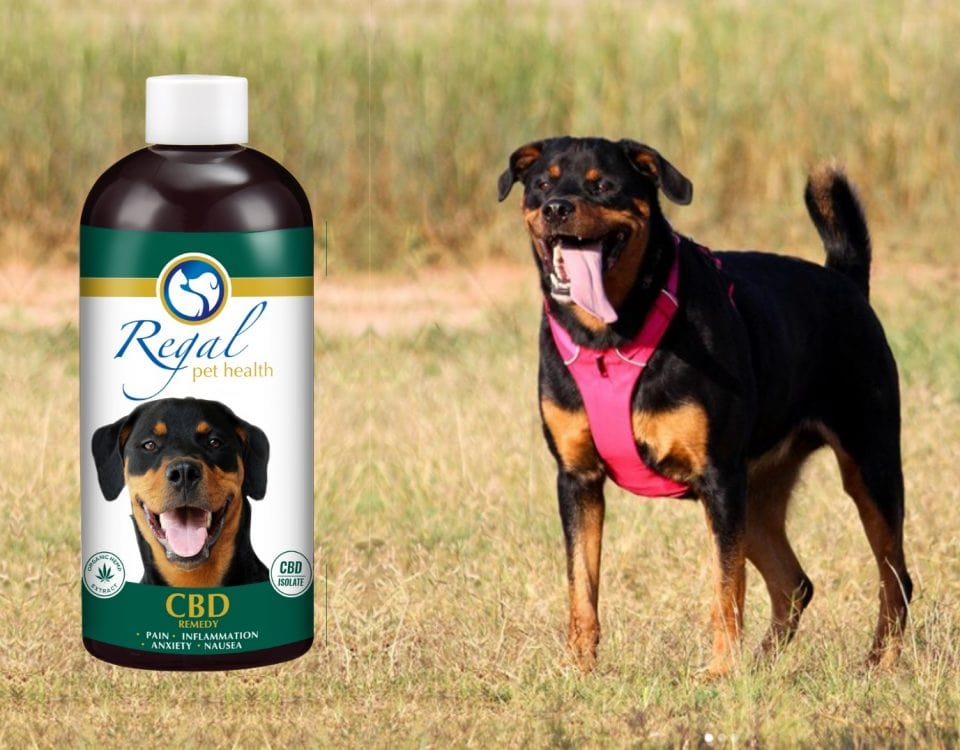 Zara in field with CBD remedy